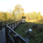 The new boardwalk at Winnersh Meadows
