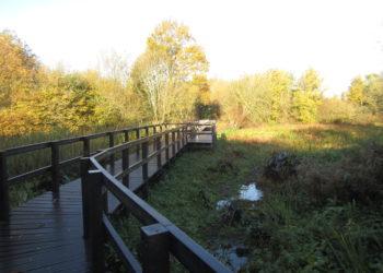 The new boardwalk at Winnersh Meadows