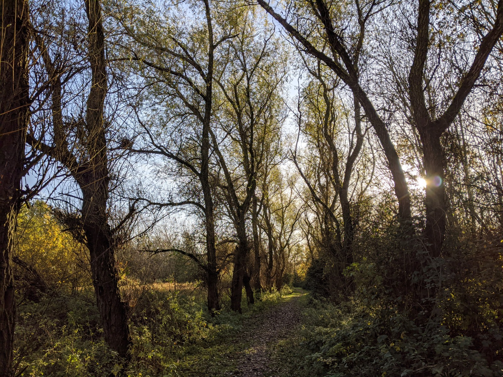 Winnersh Meadows