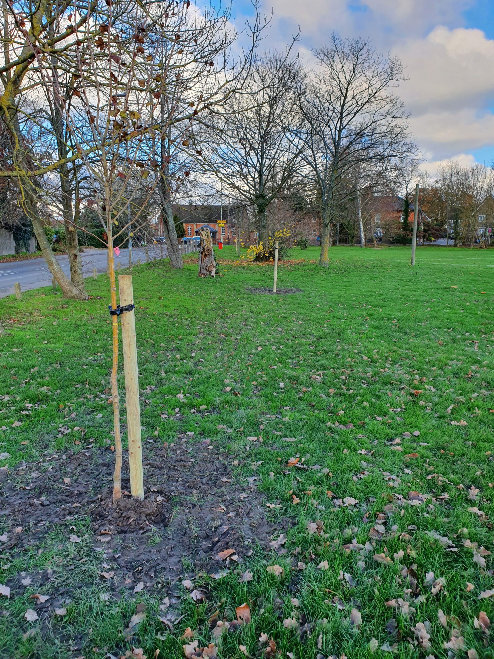 New trees planted at Bearwood Recreation Ground