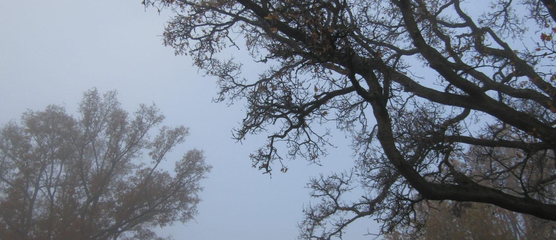Trees at Bearwood Recreation Ground