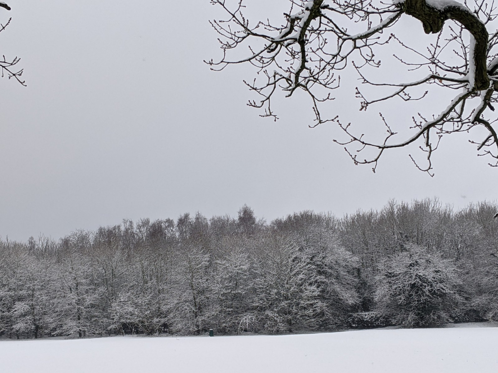 Snowy trees at Bearwood Recreation Ground